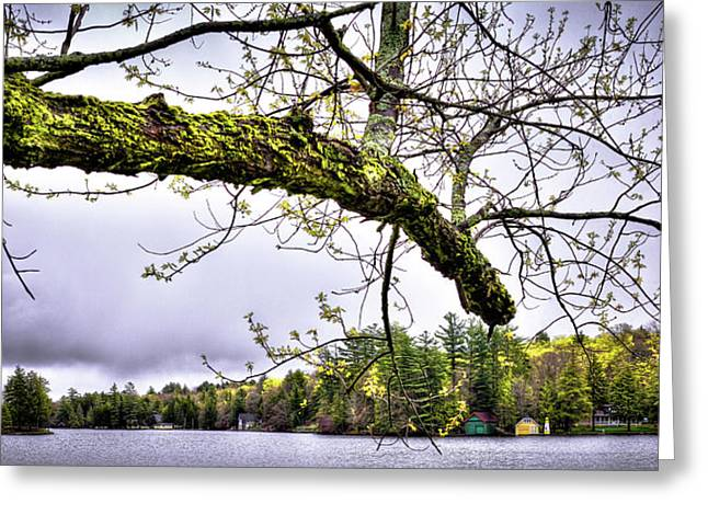 The Pond In Old Forge Greeting Card by David Patterson