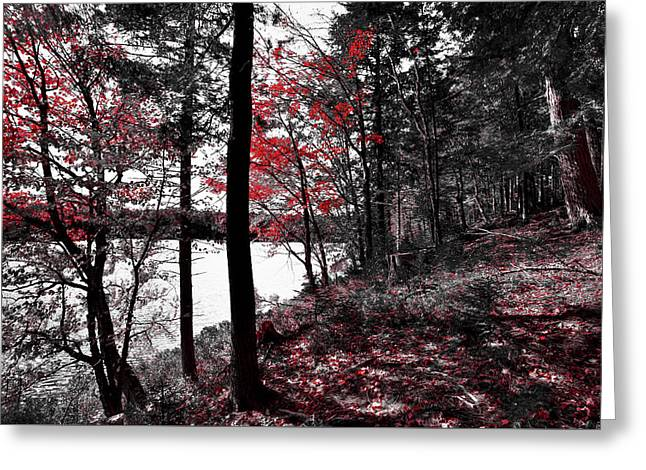 The Reds Of Autumn Greeting Card by David Patterson