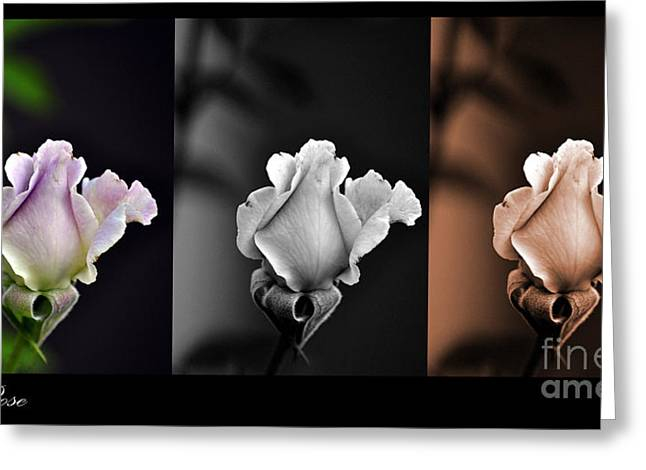 The Rose Greeting Card by Clayton Bruster