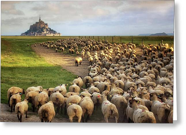 The Sheep Of Mont Saint Michel Greeting Card