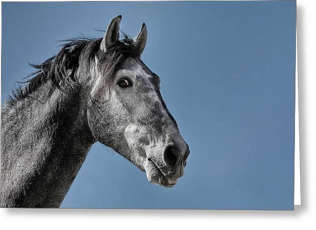 The Stallion Greeting Card by Michael Mogensen
