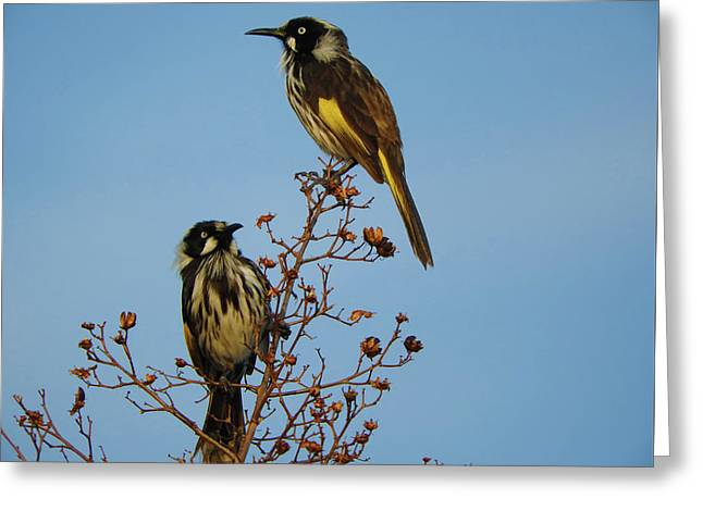 Greeting Card featuring the photograph The Two Of Us by Mark Blauhoefer