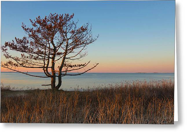 Greeting Card featuring the photograph The View by Robin-lee Vieira