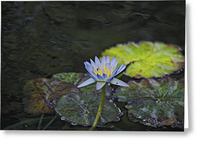The Water Lily Greeting Card by Cendrine Marrouat