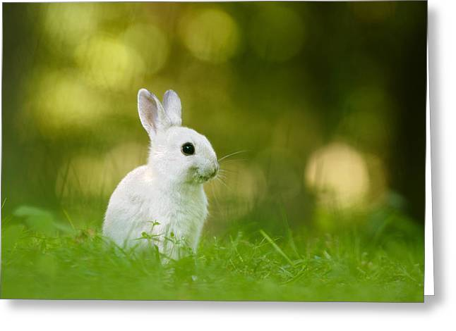 The White Rabbit Greeting Card by Roeselien Raimond