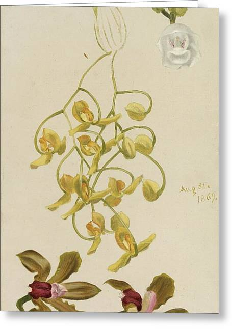 Three Orchids Greeting Card by William Jacob