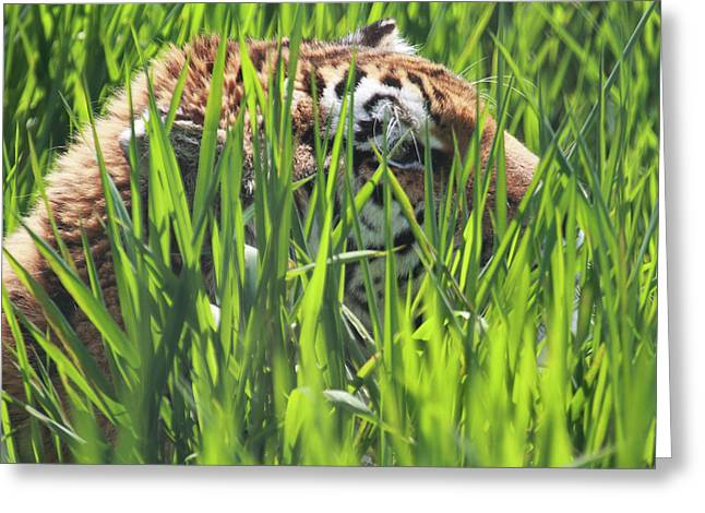 Tiger Greeting Card by Naman Imagery