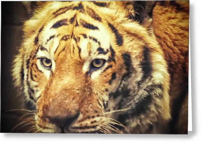 Tiger Portrait Greeting Card
