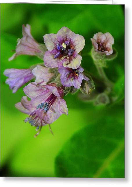 Tiny Purple Flower Greeting Card by Patrick  Short