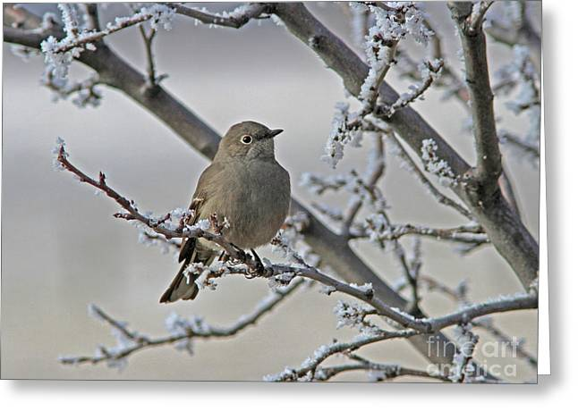 Townsend's Solitaire Greeting Card