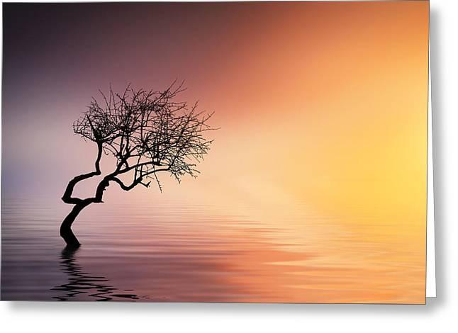 Tree At Lake Greeting Card by Bess Hamiti