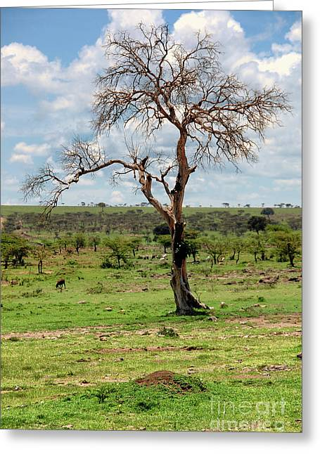 Greeting Card featuring the photograph Tree by Charuhas Images