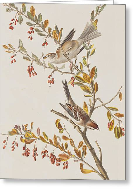 Tree Sparrow Greeting Card by John James Audubon