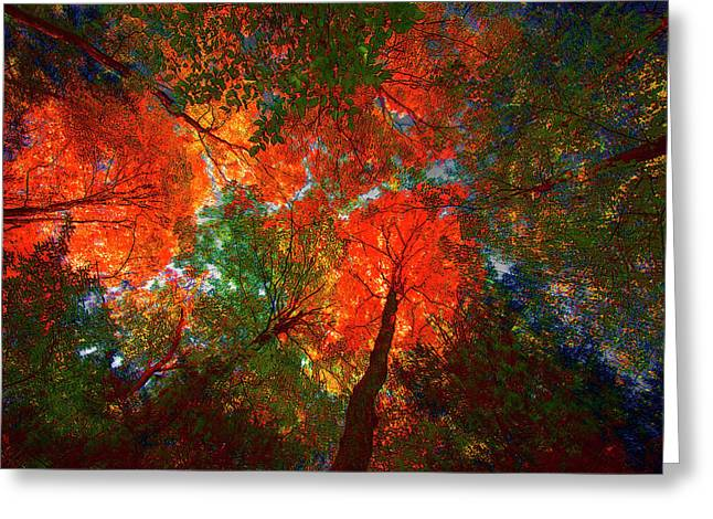 Tree Tops Greeting Card by David Stasiak