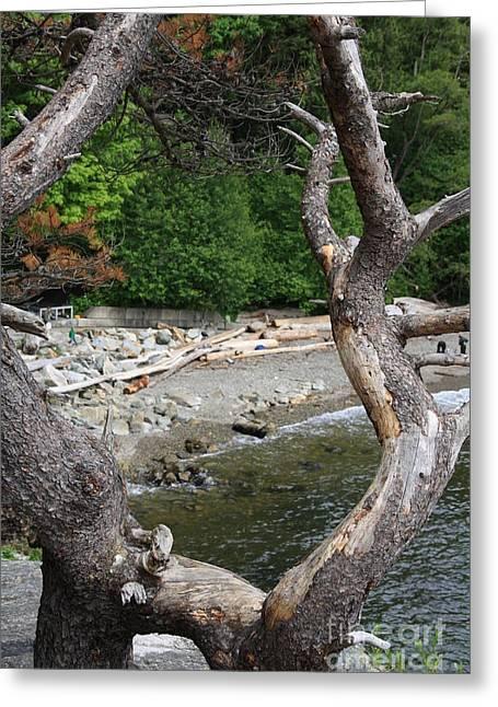 Trees  Greeting Card by Igor Baranov