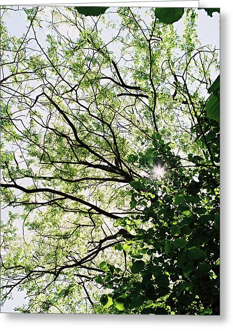 Trees In Bloom 3 Greeting Card