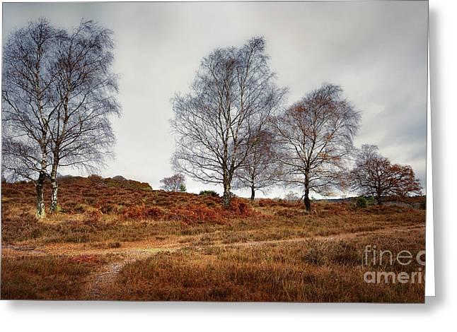 Trees Greeting Card by Svetlana Sewell