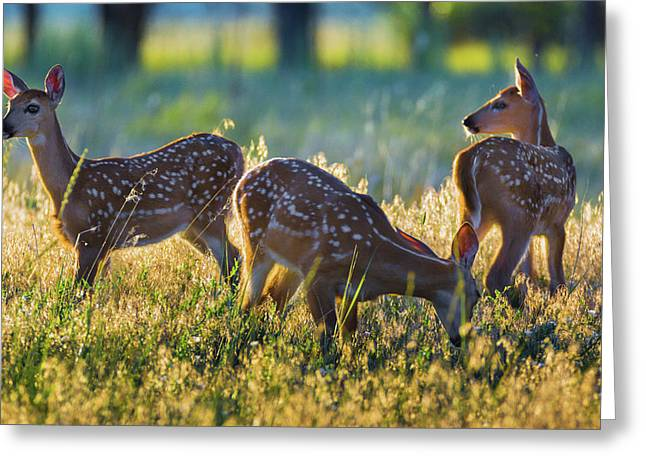 Greeting Card featuring the photograph Triplets by John De Bord