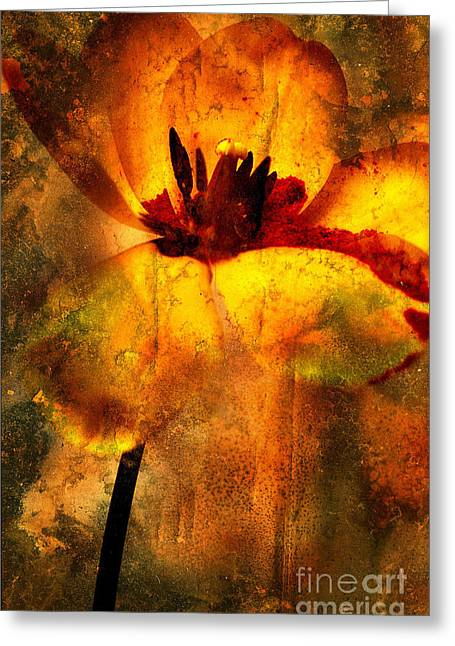 Tulip Greeting Card by Bernard Jaubert