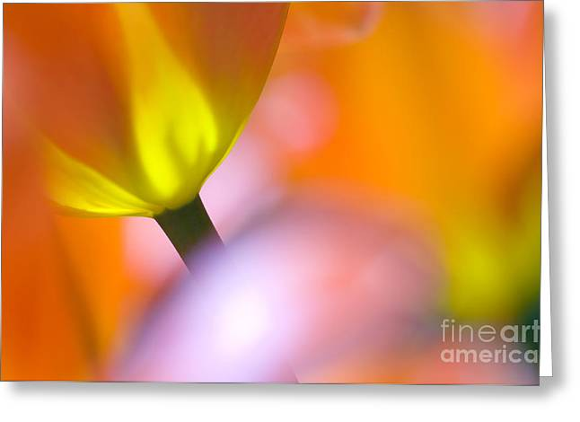 Tulips Greeting Card by Silke Magino