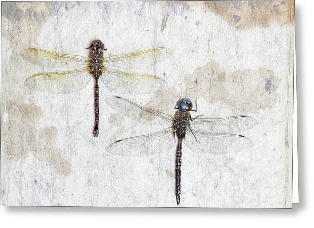 Two Dragonflies Square Greeting Card