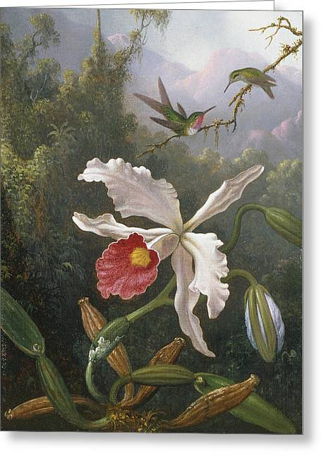 Two Hummingbirds Above A White Orchid Greeting Card