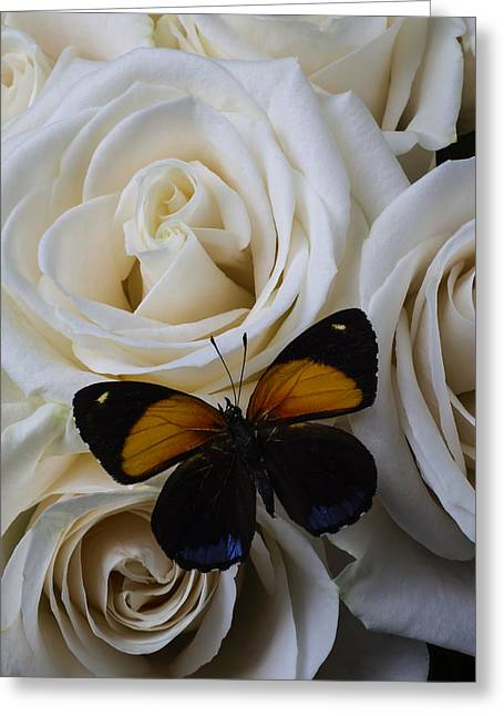Two Tone Butterfly Greeting Card by Garry Gay