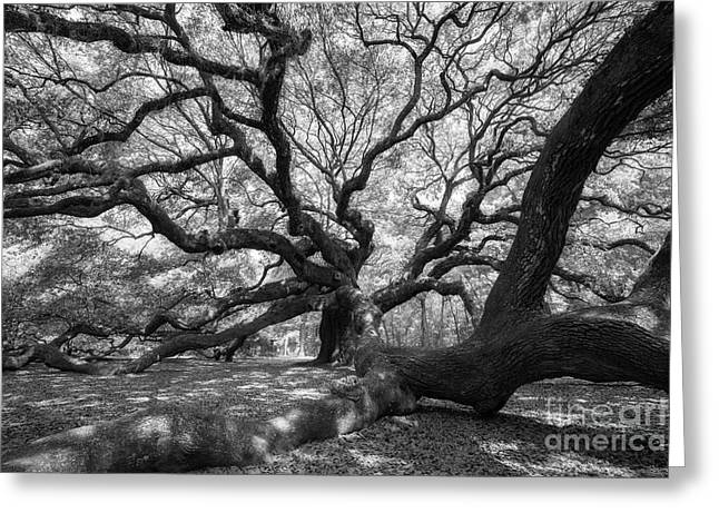 Under The Angel Oak Tree Greeting Card