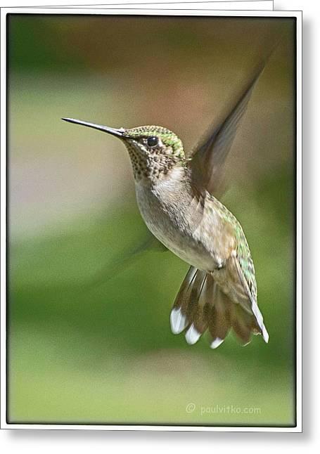 Untitled Hum_bird_five Greeting Card
