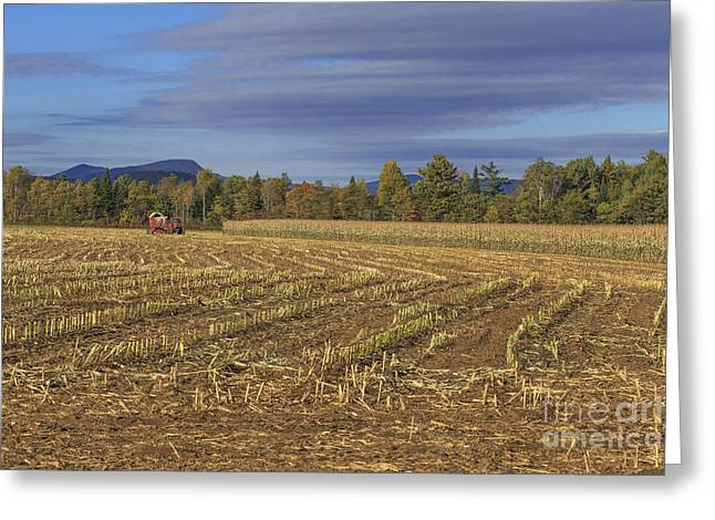 Vermont Cornfield  Greeting Card by Edward Fielding