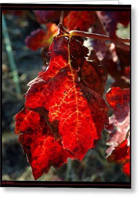 Vine Leaf At Fall Greeting Card