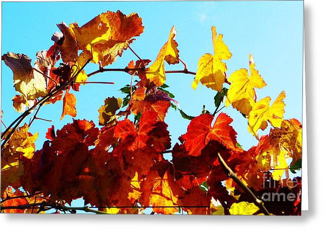 Grapevine Photographs Greeting Cards - Vineyard 12 Greeting Card by Xueling Zou