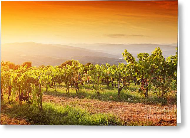 Vineyard In Tuscany, Ripe Grapes At Sunset Greeting Card by Michal Bednarek