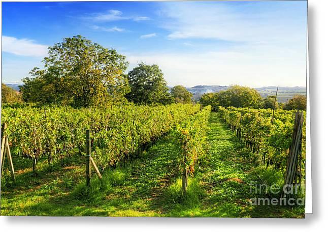 Vineyard In Tuscany, Ripe Grapes Greeting Card by Michal Bednarek