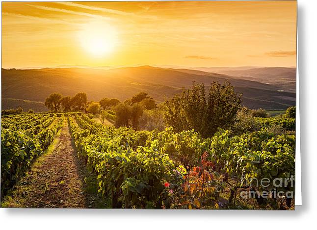 Vineyard Landscape In Tuscany, Italy. Wine Farm At Sunset Greeting Card