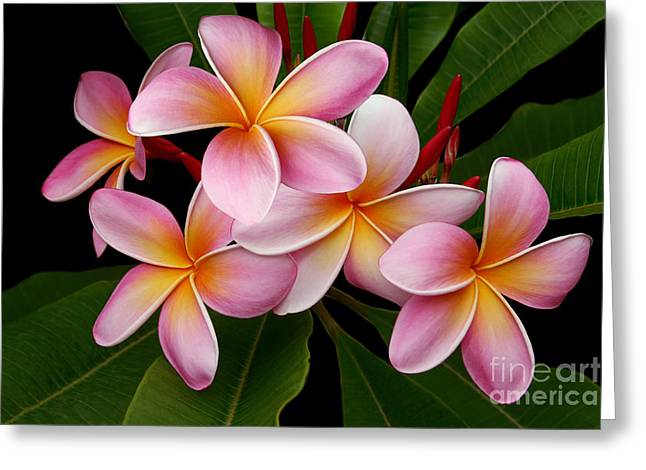 Wailua Sweet Love Greeting Card