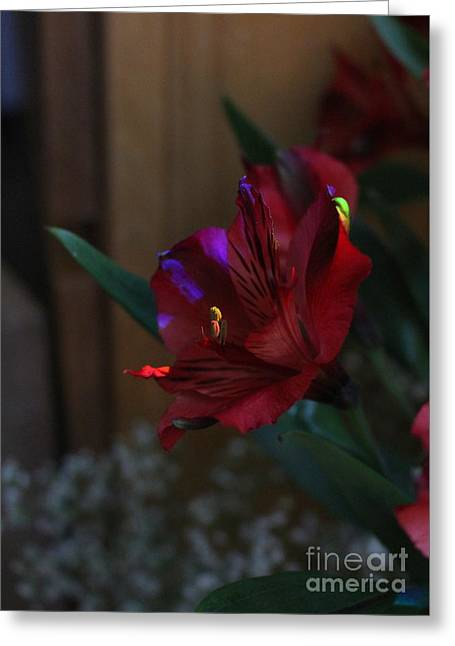 Greeting Card featuring the photograph Waiting For You by Marie Neder