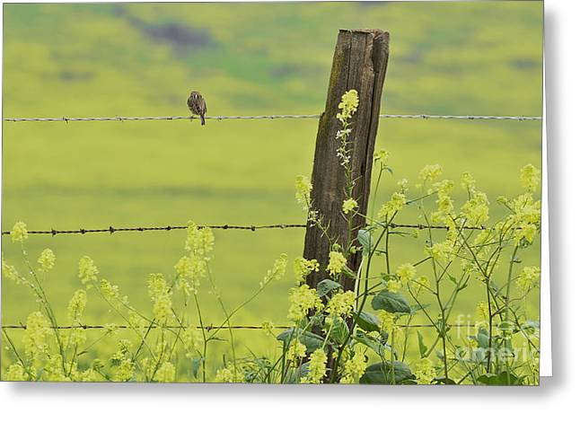 Warbler In The Meadow Greeting Card