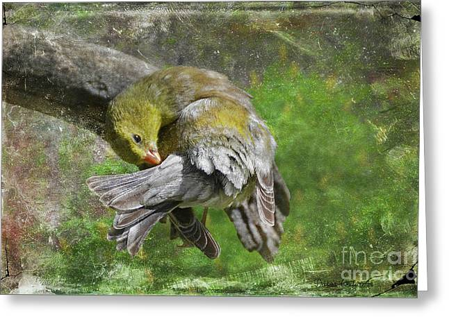 Wash Day Goldfinch, With Texture Greeting Card