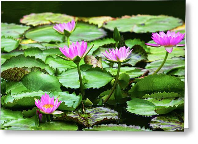 Greeting Card featuring the photograph Water Lilies by Anthony Jones