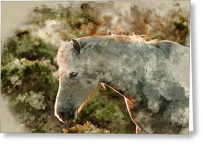 Watercolour Painting Of Beauttiful Close Up Of New Forest Pony H Greeting Card by Matthew Gibson
