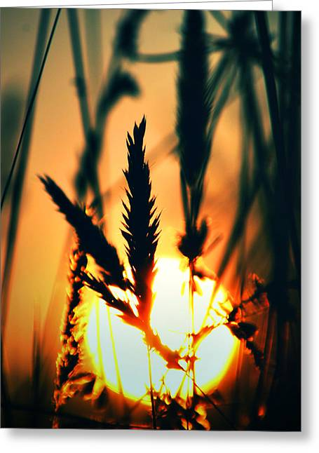 We Are Free Greeting Card by Kerry Langel