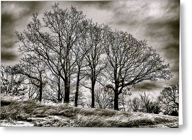 Weathered Greeting Card by Karen M Scovill