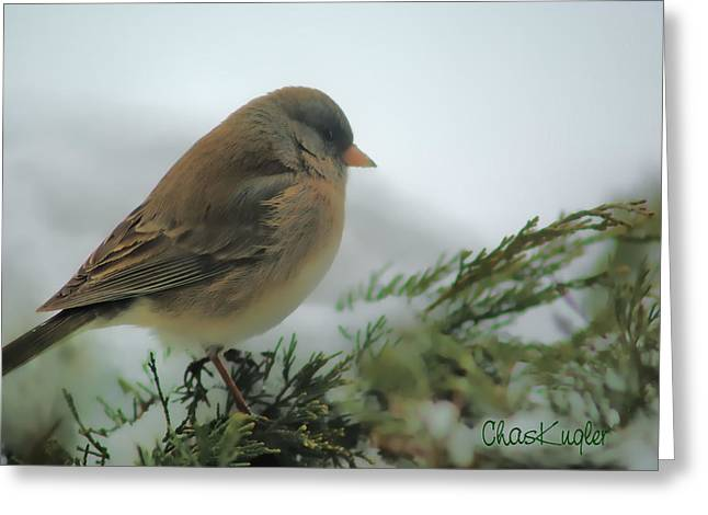 Weathering The Storm Greeting Card by Chuck Kugler