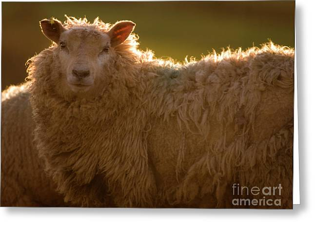 Welsh Lamb In Sunny Sauce Greeting Card by Angel  Tarantella