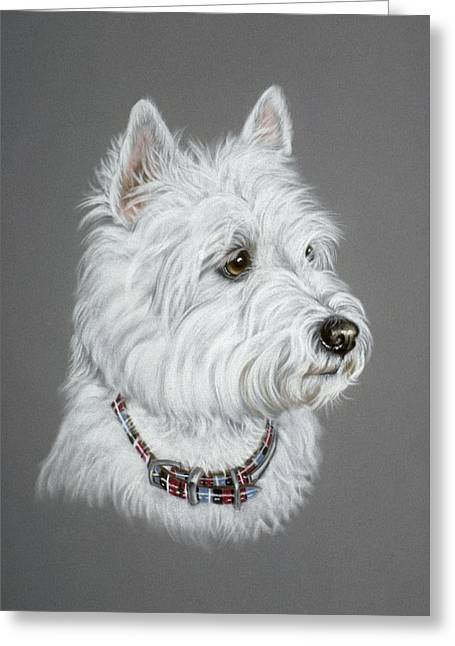 Scottish Terriers Pastels Greeting Cards - West Highland White Terrier  Greeting Card by Patricia Ivy