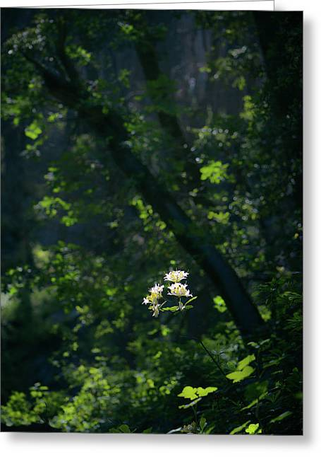 Greeting Card featuring the photograph Western Azalea by Alexander Kunz