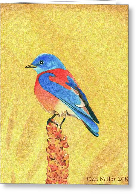 Western Bluebird Greeting Card
