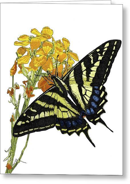 Western Tiger Swallowtail On A Western Wallflower Greeting Card