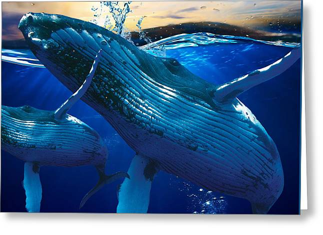 Whale Watching Art Greeting Card